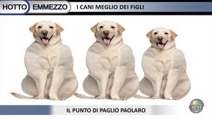 il-punto-di-paolo-pagliaro-cani-ottoemezzo
