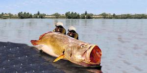 pescatori-triglia-gigante